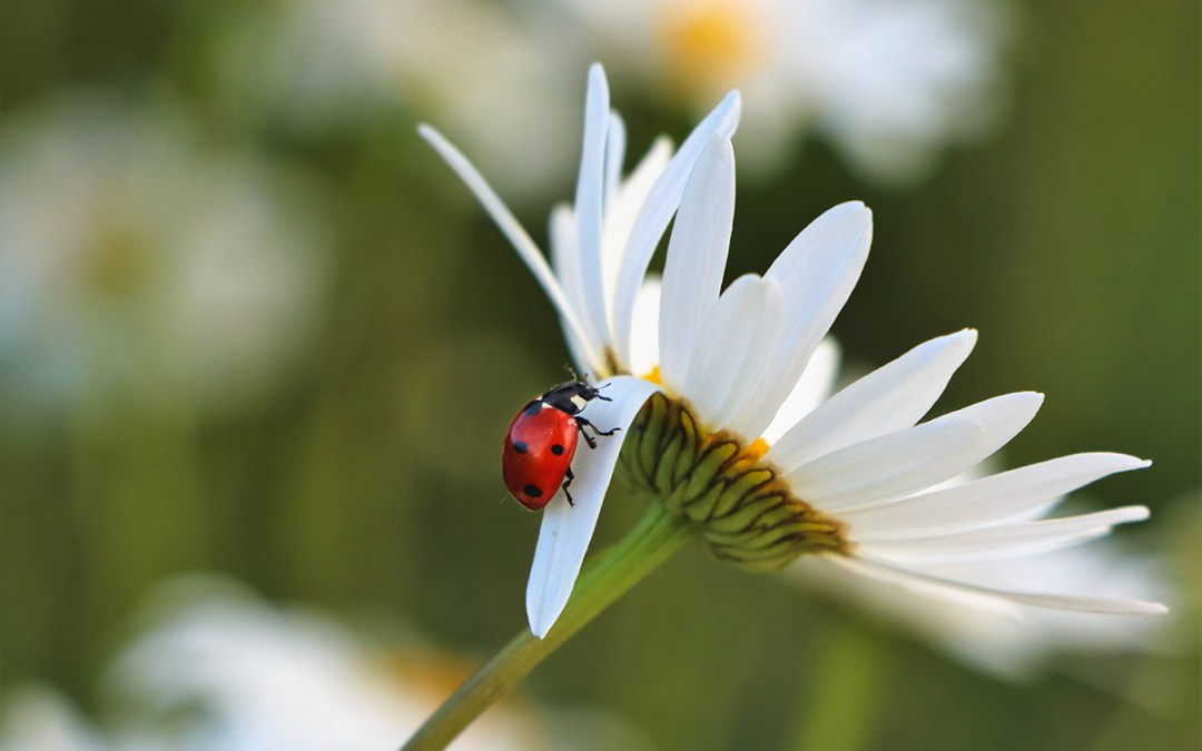 Why You Should Have Beneficial Insects in Your Garden