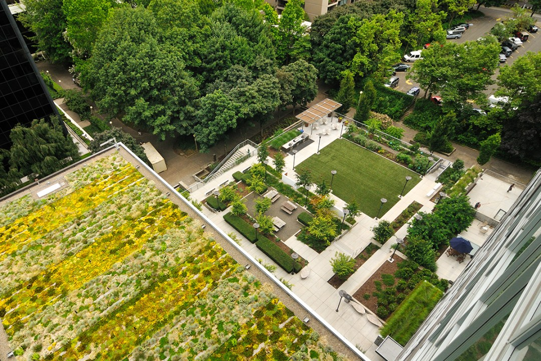 drone photo of green roof and apartment outdoor patio landscape design