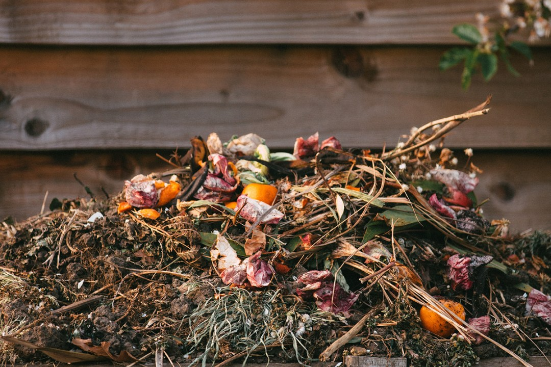 A pile of food and yard compost