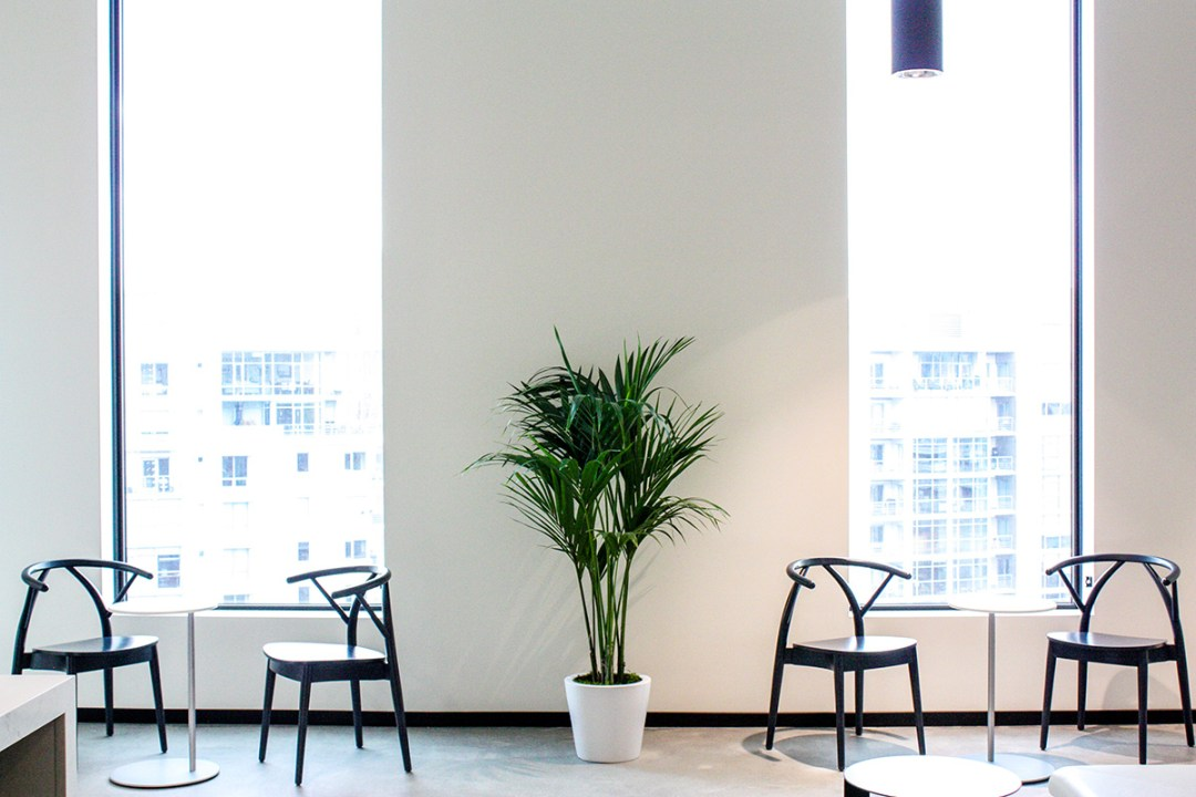 Palm in workplace next to chairs and bistro tables