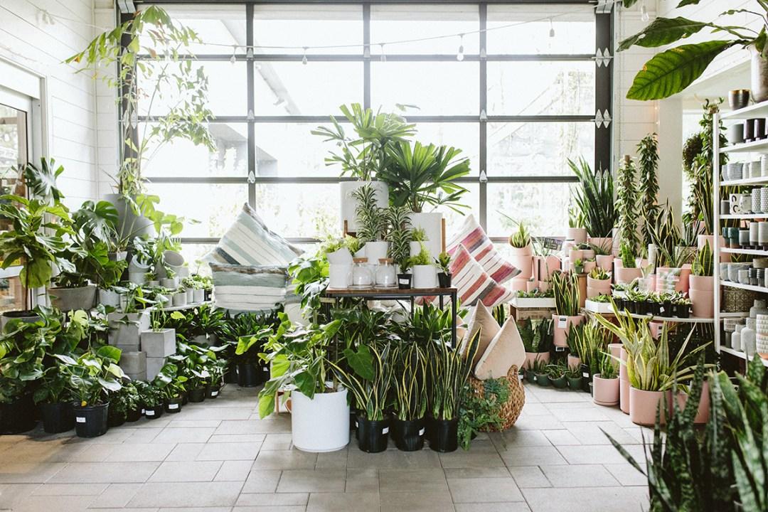 Indoor Plants Lake Oswego