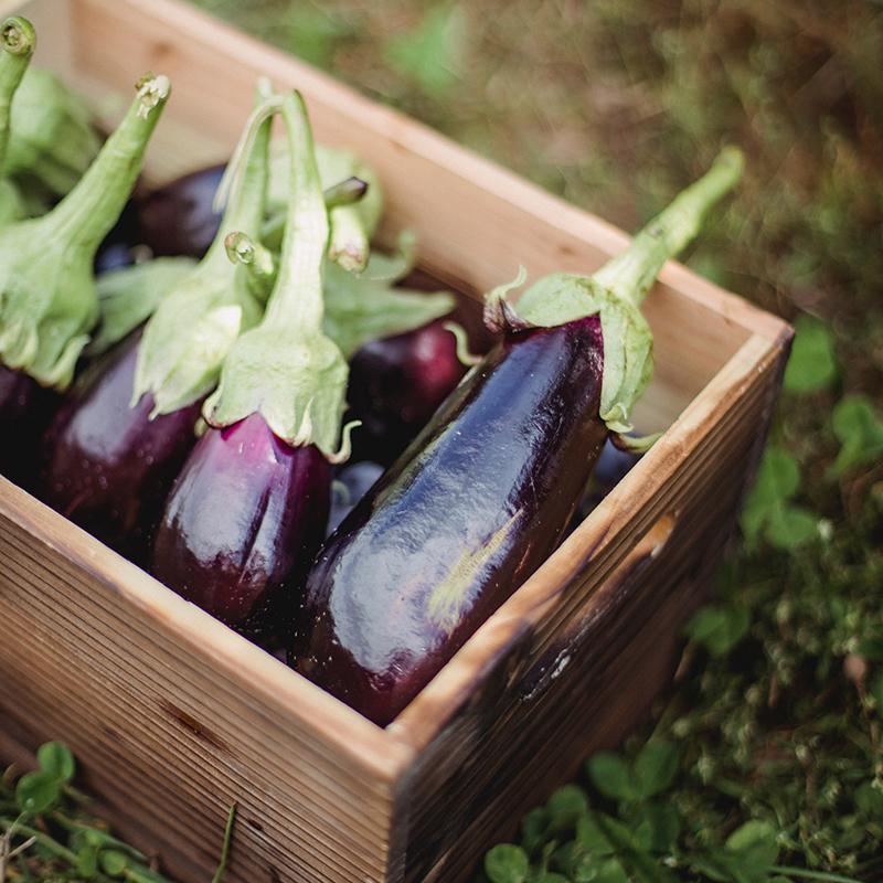 homegrown eggplant