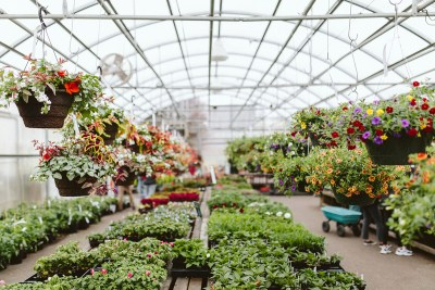 Shorty's Garden Center greenhouse