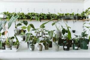 rare houseplants display