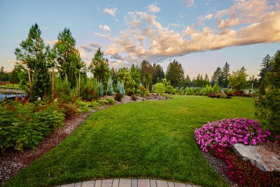landscape lawn and plants