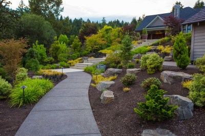 pathway with plants to house