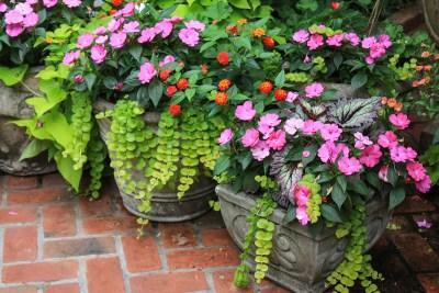 Urban Plantscapes Exterior Container Plants