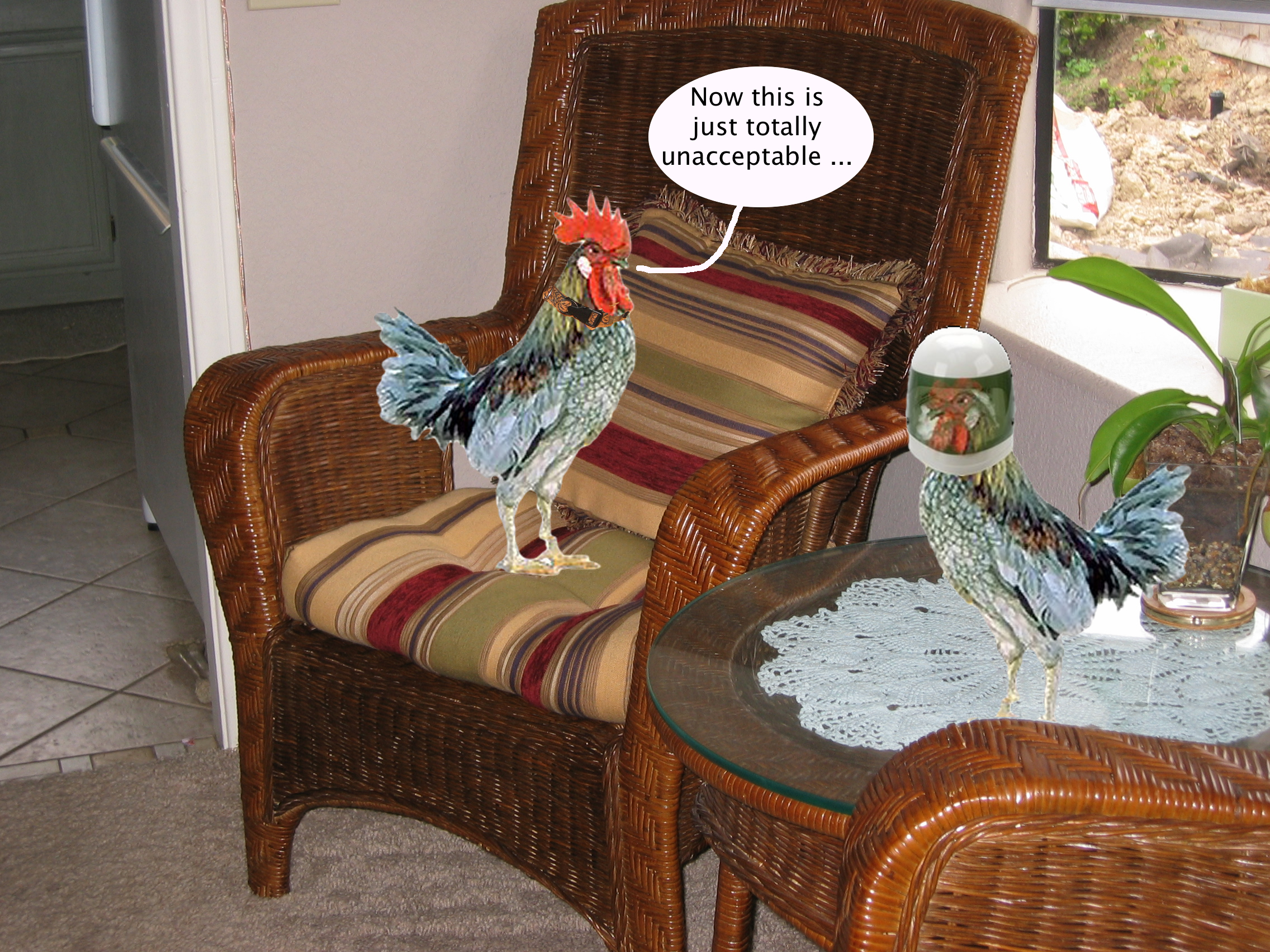 tucker_the_chicken