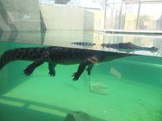 Krokodilzoo Darwin