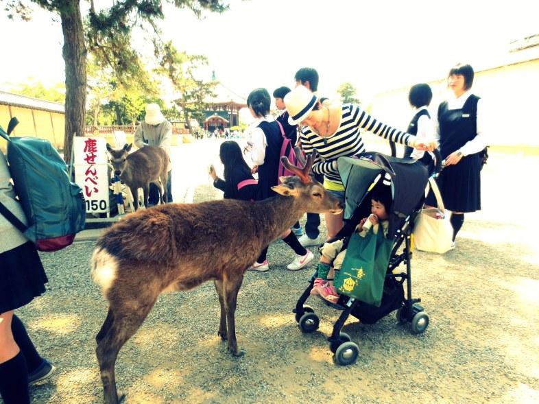 Nara daims