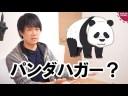 【パンダハガー】日本の人権派みたいな人って何故中国の人権弾圧に何も言わないの?の画像