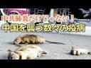 【コロナウイルス】肺炎だけじゃない!中国を襲う数々の疫病!の画像