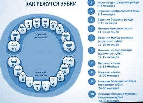Anne Gibi Dişler