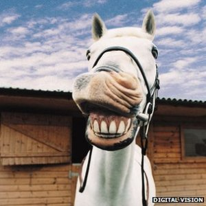 A Horse Walks Into A Dental Office…