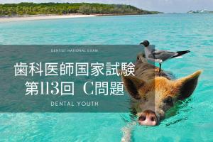 第113回 歯科医師国家試験 C問題