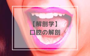 解剖学:口腔の解剖