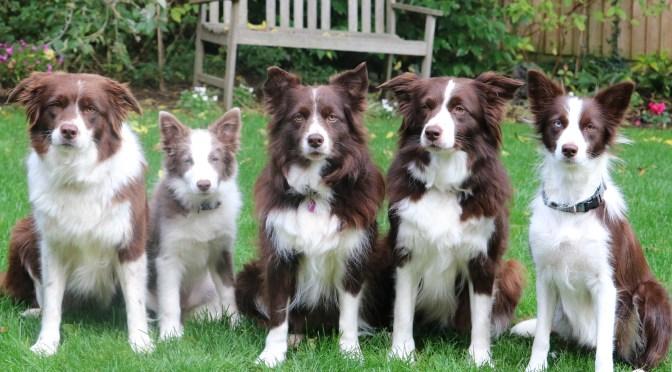 Desirable Behaviour in Dogs