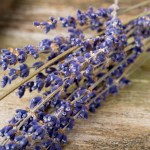 05experts-all-natural-lavender