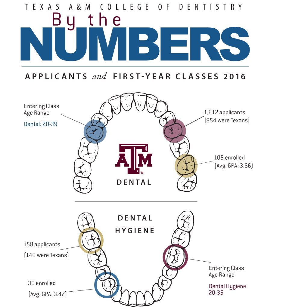 Infographic: Breakdown of applicants to Texas A&M College of Dentistry for academic year 2016-2017