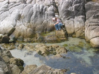 Felicia examining a tide pool at Pacific Grove
