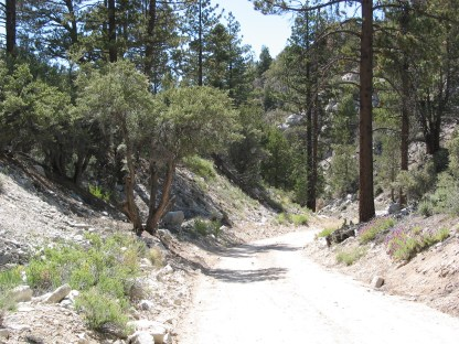 """""""The Road From Hell"""", Forrest Service Road 1N02"""
