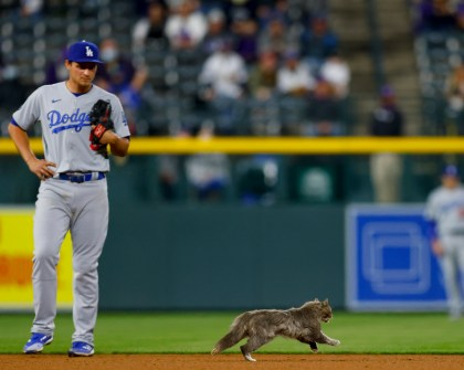 A cat runs onto the field and past Corey Seager of the Los Angeles Dodgers during the eighth inning against the Colorado Rockies at Coors Field on April 2, 2021 in Denver.
