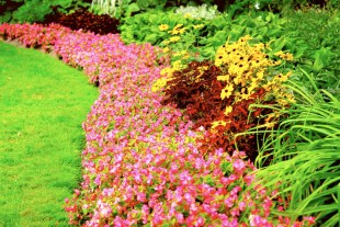 Lush Denver custom Landscape Design for less!