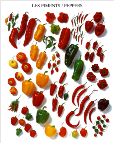 Poster of many Pepper Varieties
