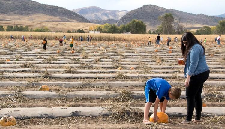 161009-PumpkinFestival-ChloeAiello-2.jpg