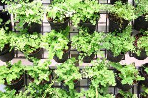 suplir-tanaman-hias-hidroponik
