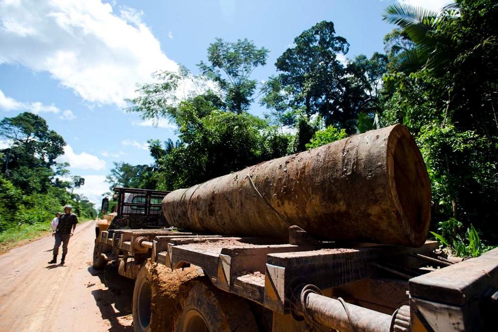 Madeira retirada de terra indígena em Colniza (Foto: Marcelo Camargo/Agência Brasil)