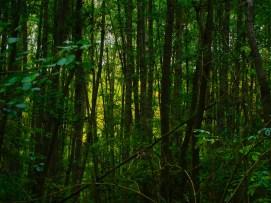 Dans la forêt (GS, août 2015)
