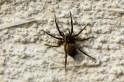 Wolf spider female 9 14