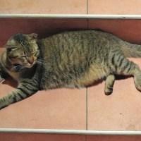 Pisica lesinata de caldura