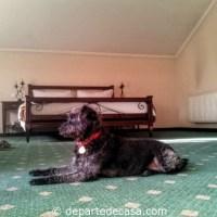 La Residenza, cazare dog friendly in Romania