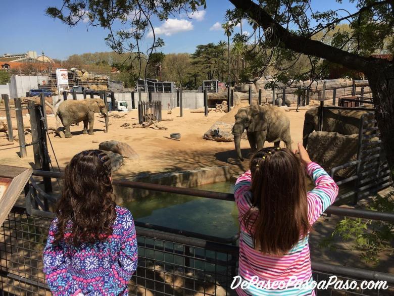 Niñas observando los elefante jugando con los troncos