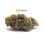 Therapy_OK