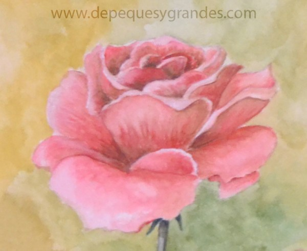 detalle de rosa