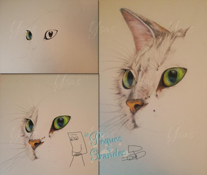 pasos de dibujo de gato a lápiz de color