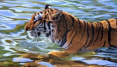seguros de viaje tigre agua nadar verde naranja rayas