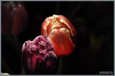 DePerfecteFoto_Prachtige_Bloemen_0120