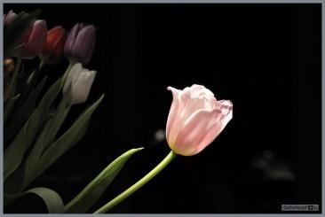 DePerfecteFoto_Prachtige_Bloemen_0125