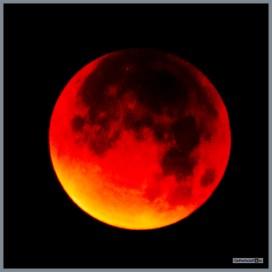 bloedmaan_27_09_2015__104 (Kopie)