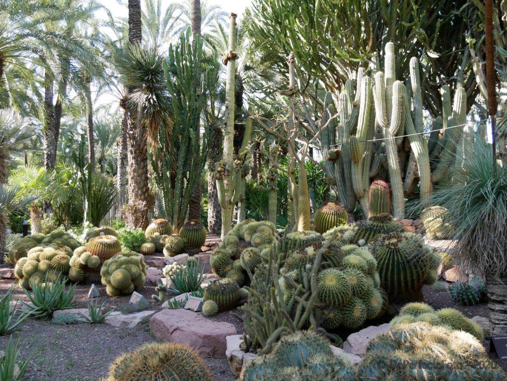Botanische tuin - Elche