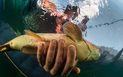 Guía definitiva 2021 ¿Qué es la pesca deportiva?