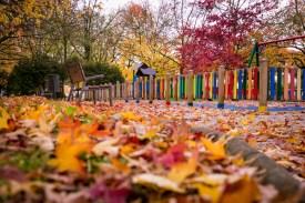 Hojas en un parque de Irun