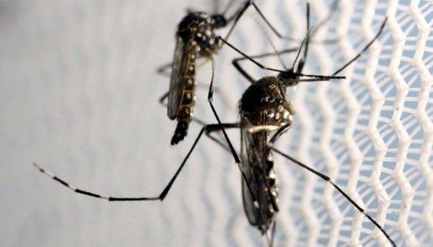 Waspada nyamuk Zika.