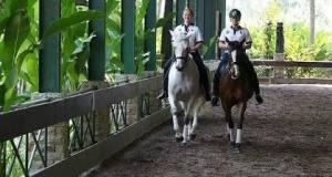 Kandang kuda Arhayasa di Limo jadi tempat karantina kuda kuda atlet Sea Games.