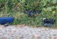 Localizan bolsas y maleta con restos humanos cerca de la Plaza de Toros de Salagua, Manzanillo