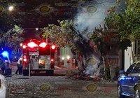 Se incendian árboles en la Ramón Serrano, Bomberos evita se extendiera a viviendas cercanas